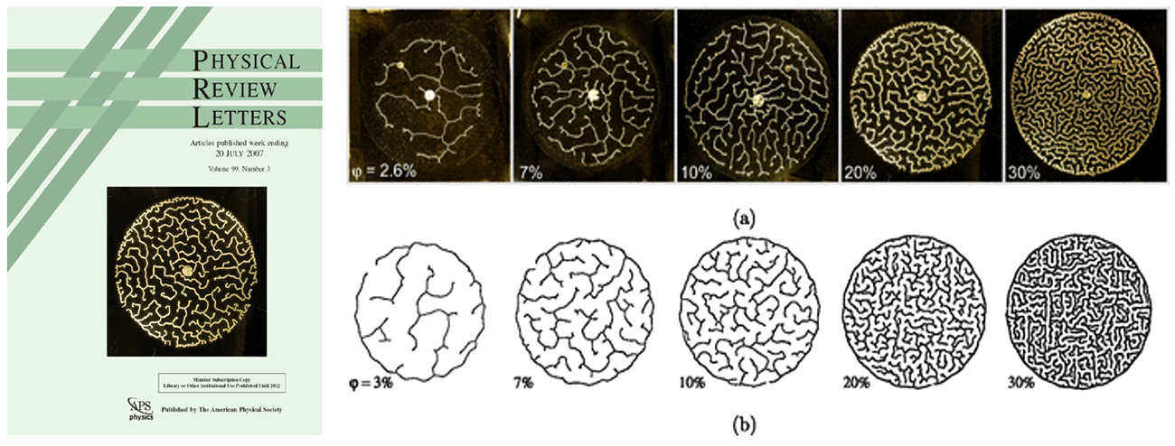 Mazes: Pattern formed in a drying process where a mixture of grains and fluid (golden area) between two glass plates is invaded by air (black area.) The black-and-white pictures are computer simulations of the same.